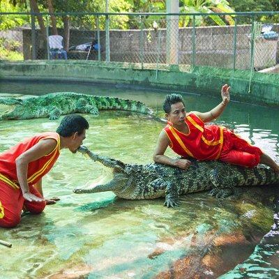 See a crocodile show