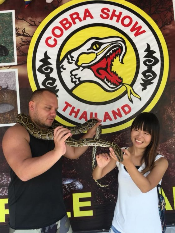 Visit the amazing Cobra Show