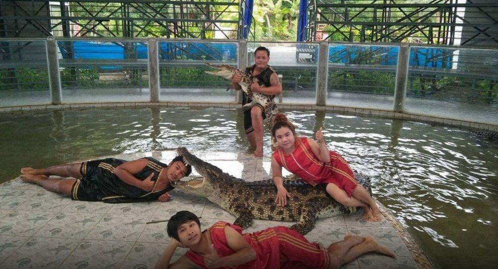 Lamai Crocodile Live Show