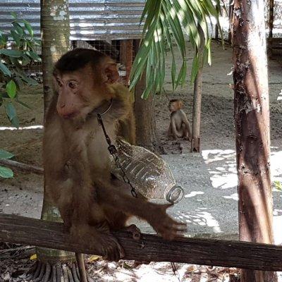 Zoo Singe