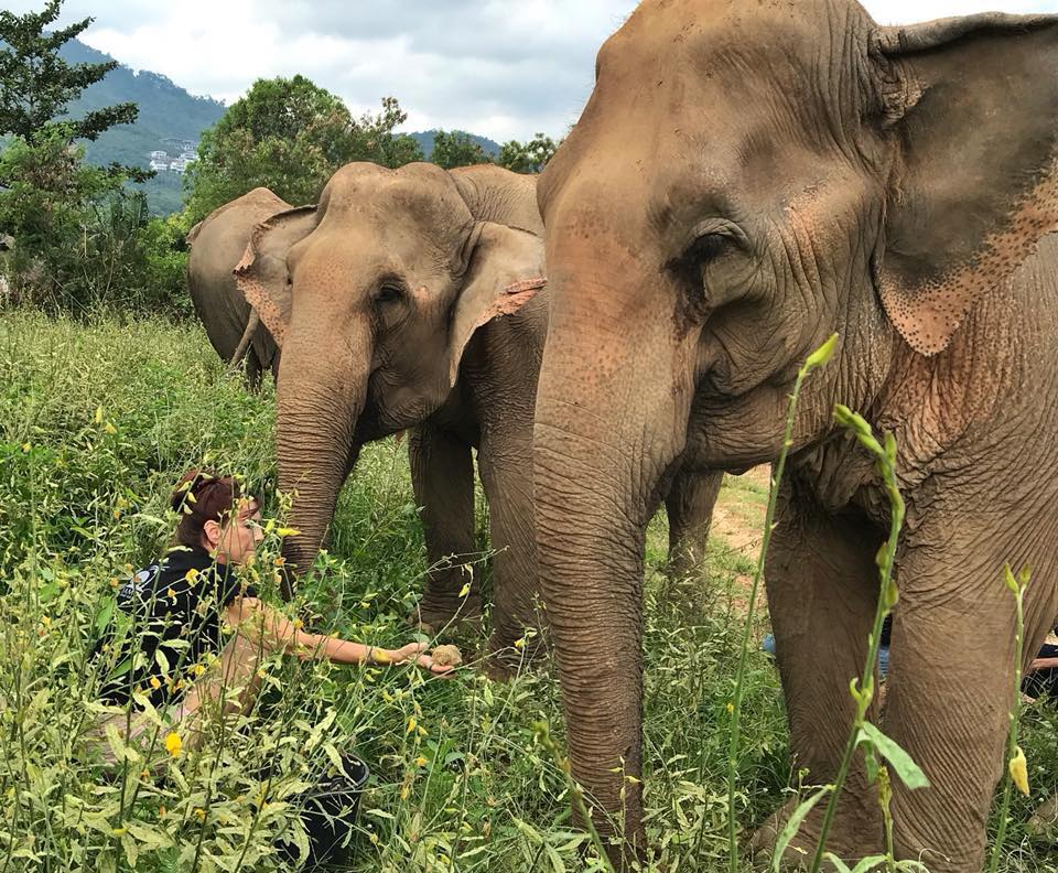 Morning tour to the Samui Elephant Sanctuary