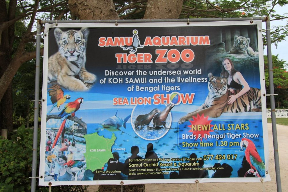 Visit a zoo of funny animals
