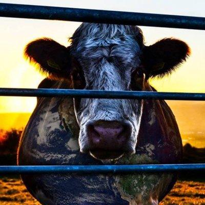 Free Cowspiracy Screening