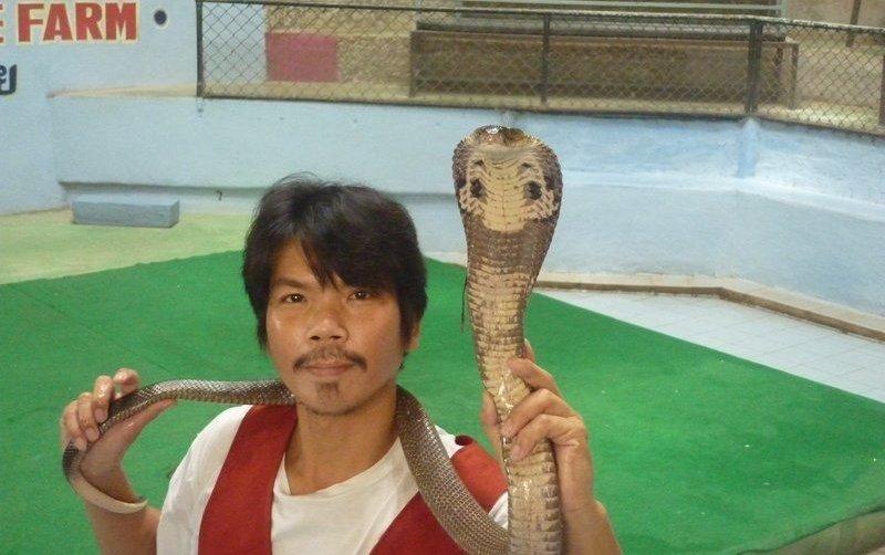 See a cobra show