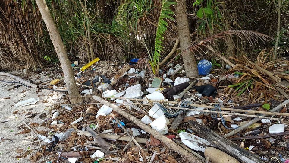 Tiger Zoo again beach cleanup