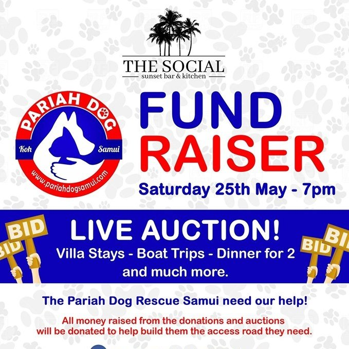 Pariah Dog Fund Raiser!