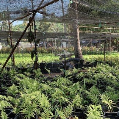 19th Landscape Nursery, Koh Samui