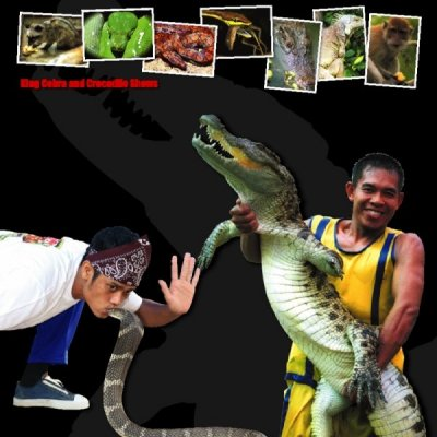 Samui Crocodile Farm