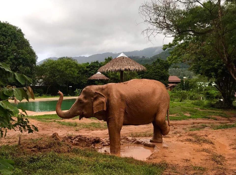 Samui Elephant Sanctuary