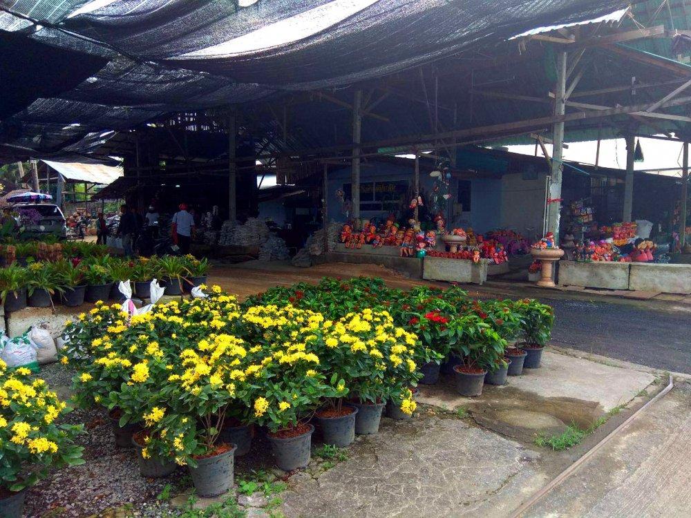 Plants market