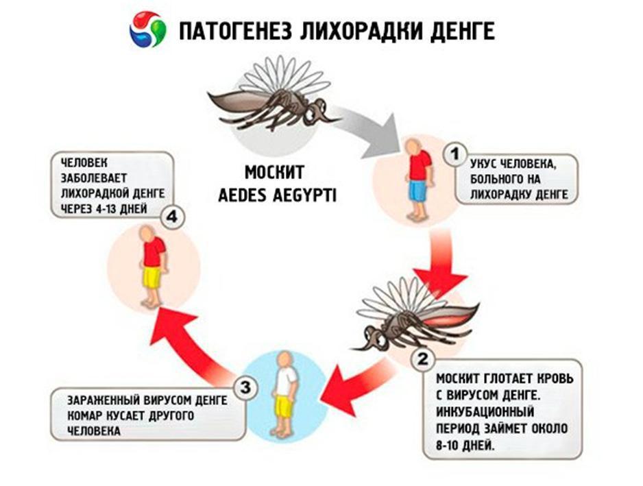 лихорадка денге в картинках внес залог